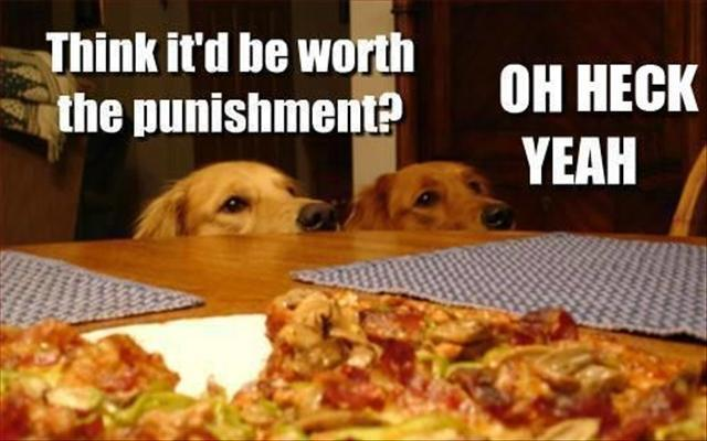 Image result for funny animal pics with captions