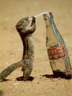 Squirrel+Drinking+Coke